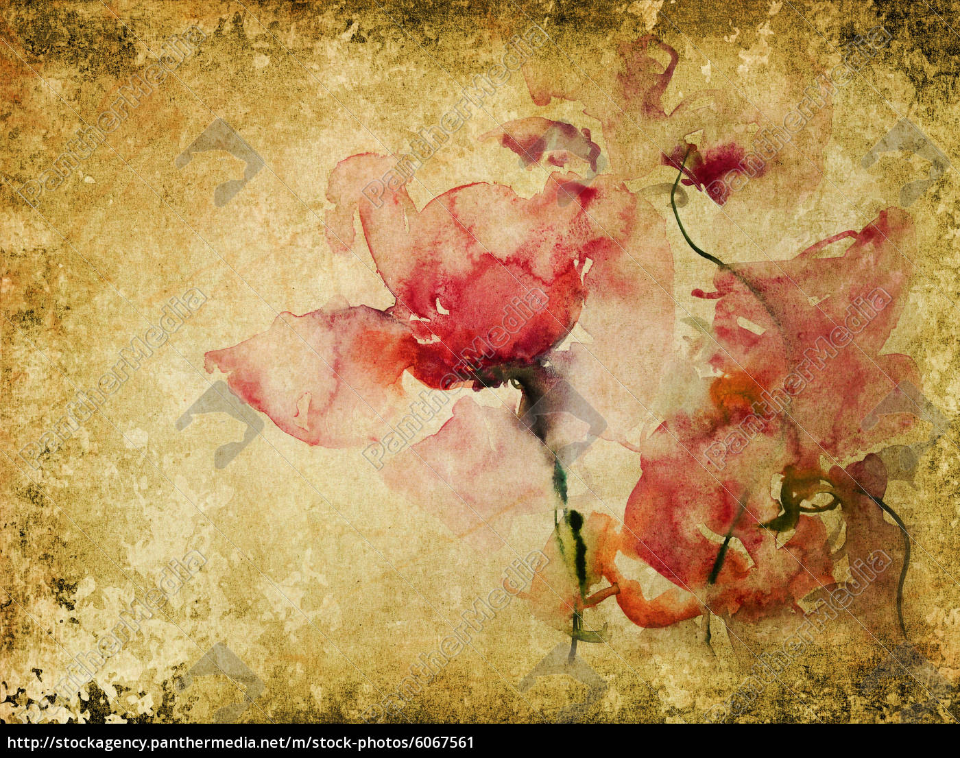 Https M Stock Photos 6058031 Senior The Wetbrush Watercolor Mossaics Starburst Roses Parchment Retro 06067561 High
