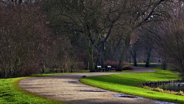 curves in the park