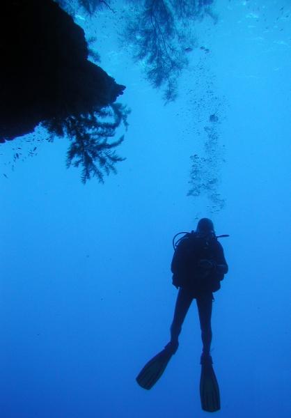 diver at drop off
