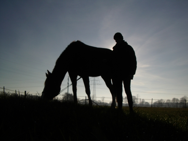 horse and rider in sunset