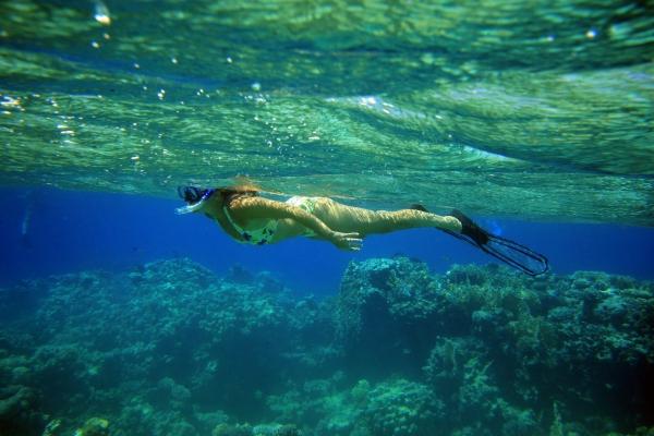 snorkel snipe