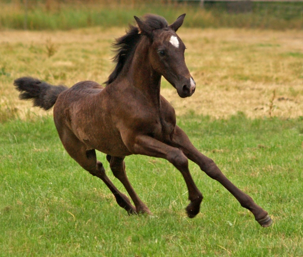 foal in action