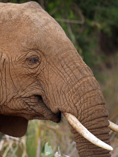 time to tusks clean