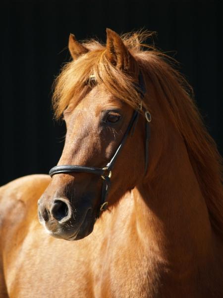 pony in the dark