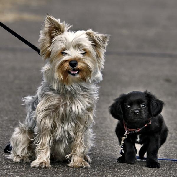 dogs looks