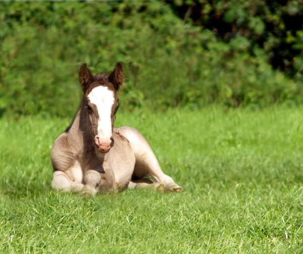 foal at the siesta