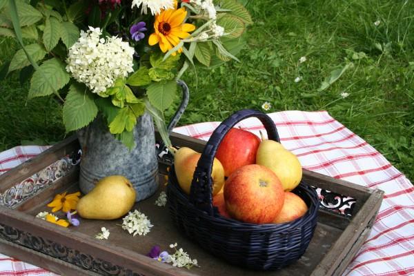 fruit pause 6