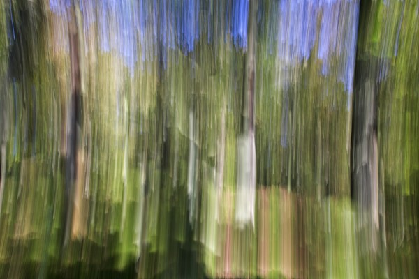 an abstract woodland impression derbyshire