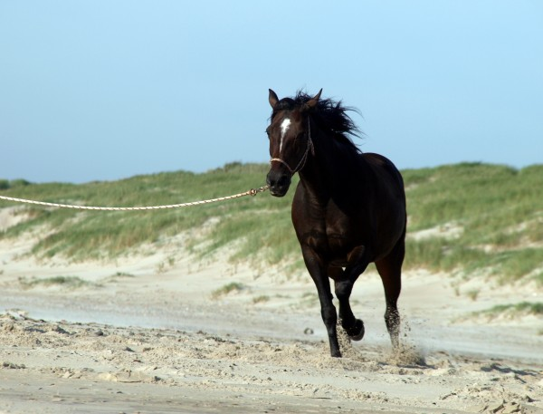 trotting on the beach
