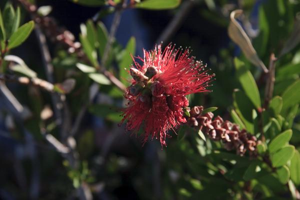 red winter flower