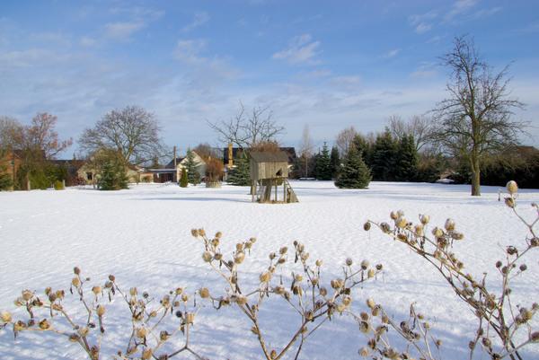 garden in winter garden