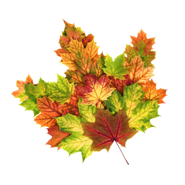 colorful autumn leaves shaped as a