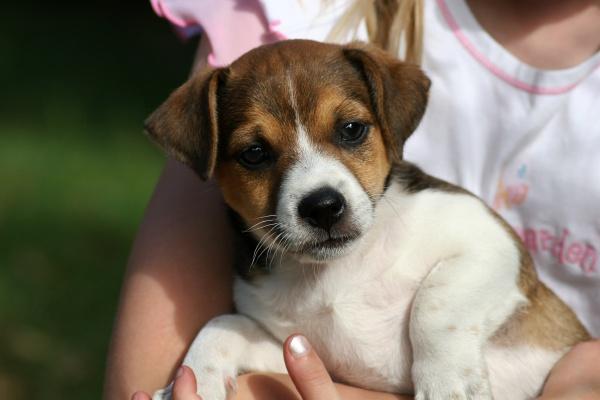 dog puppy in closeup