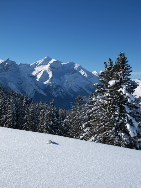 spruces and mountain named oldenhorn alps