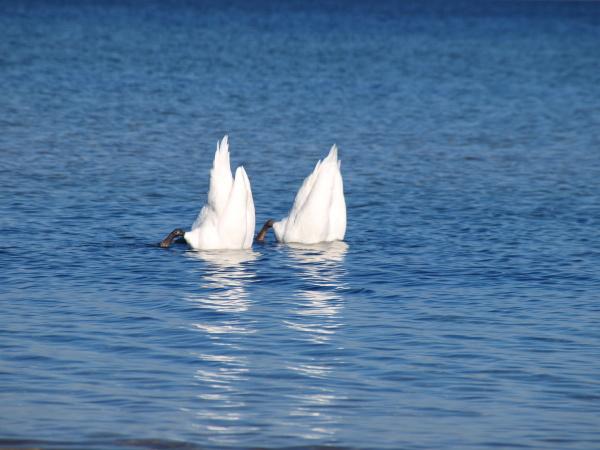 water north sea salt water sea