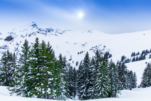 beautiful winter landscape with snow covered
