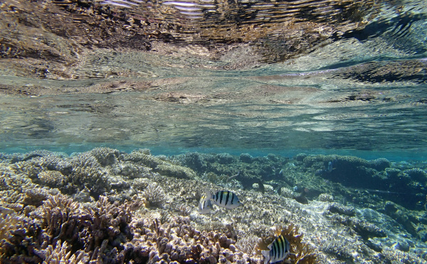 snorkel in the red sea