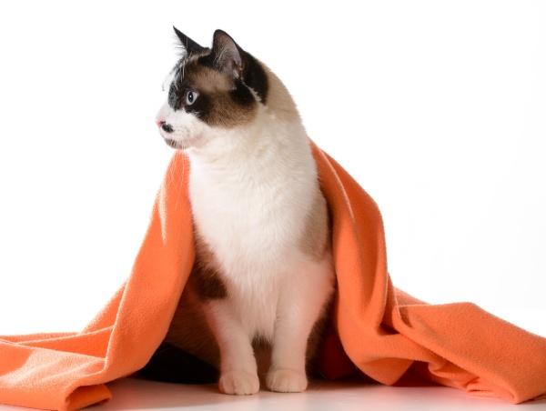 cat under cover