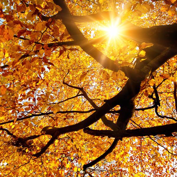 sun shines through tree in autumn