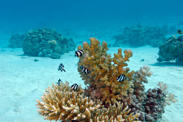 coral reef with hard coral and