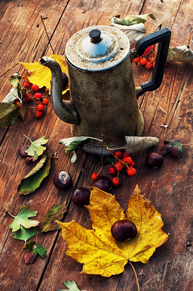 autumn fruits and berries on a