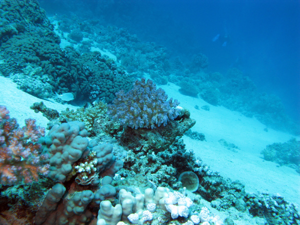 bottom of tropical sea with coral