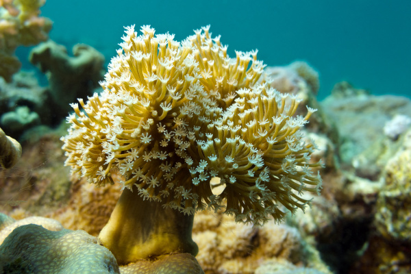 coral reef with soft coral at