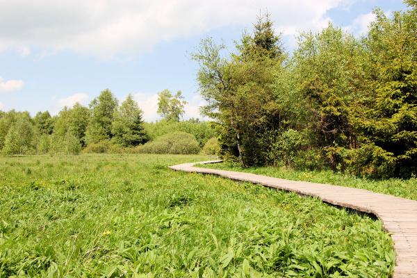 boardwalk across swampland rhoen mountain