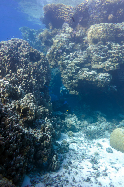 coral reef with great hard corals