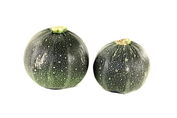 fresh round zucchini