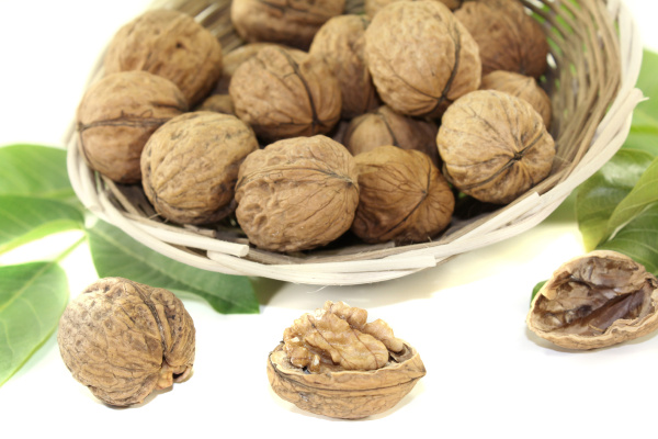 fresh walnuts with walnut leaves in