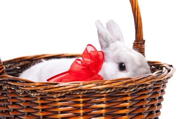 white rabbit with ribbon white rabbit