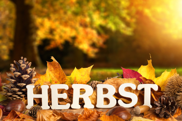 atmospheric scenery with autumn lettering