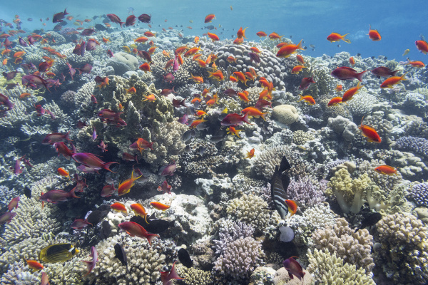 colorful coral reef in tropical sea