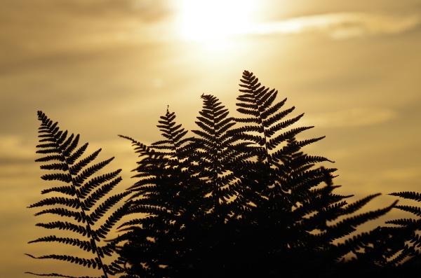evening light evening sun harmony view