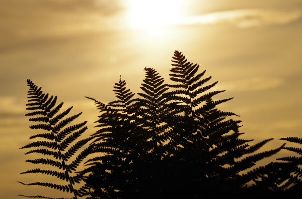 evening light, evening sun, harmony, view, view, view - 14929297