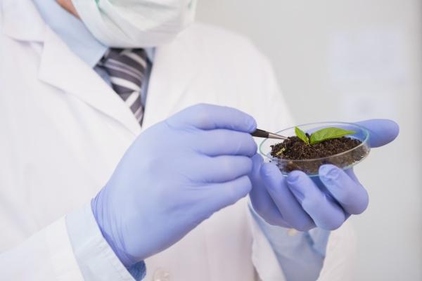 scientist analysing plant in petri dish