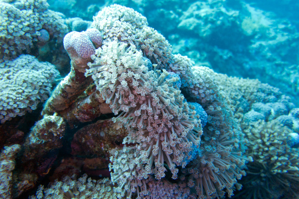 coral reef with soft coral sessile
