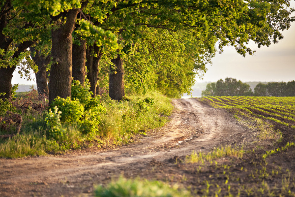 spring, arable, fields., country, road, and - 16320695