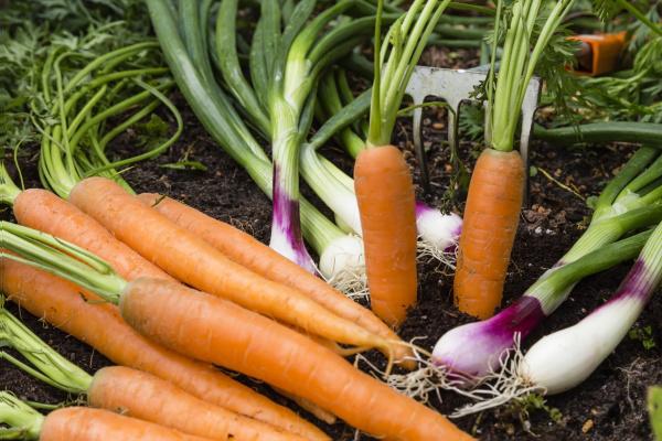 vegetable, harvest, in, the, garden - 16321429