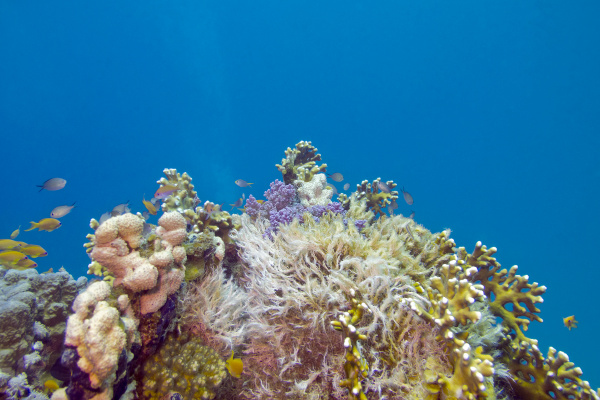 colorful coral reef on the bottom