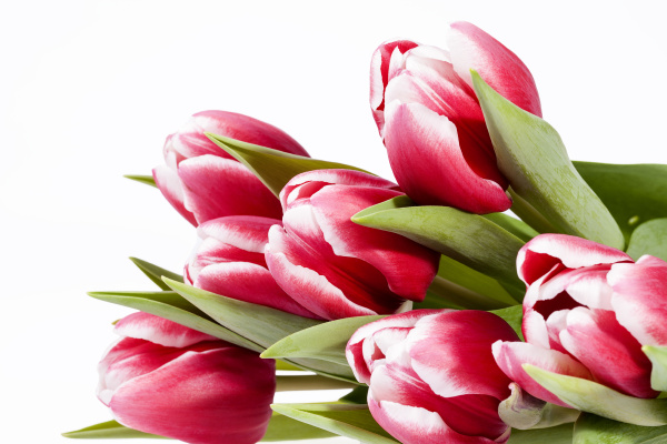 bouquet, of, red, tulips, , flowers - 16324043