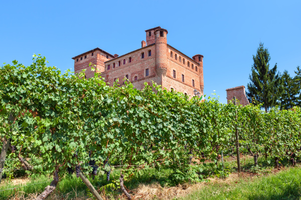 vineyards, of, grinzane, cavour, in, italy. - 16339449