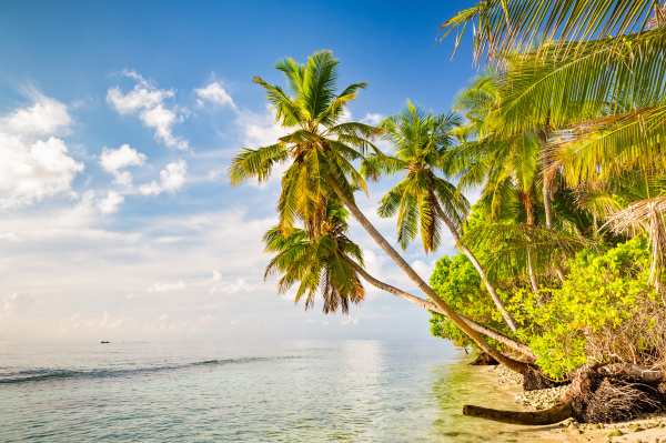 palm, trees, on, maldivian, beach - 16344715