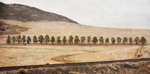 landscape with dry farm land and