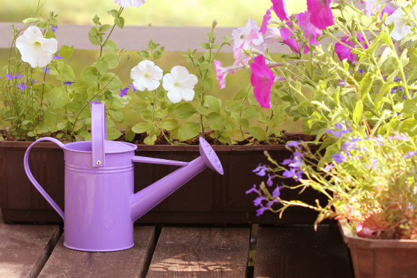 watering flowers in balcony