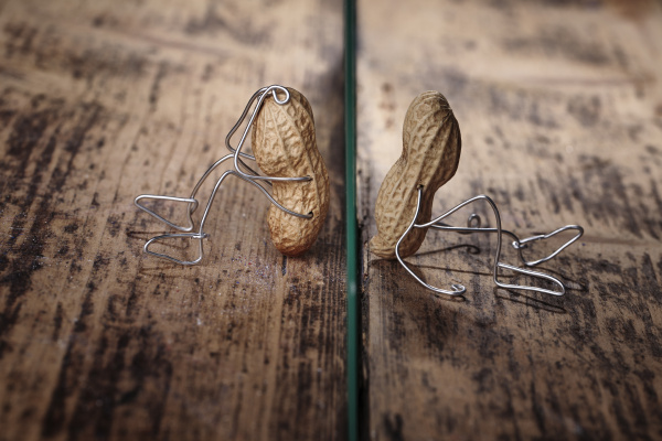 peanut manikins separated through glass pane