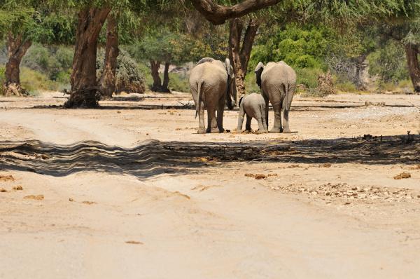 africa namibia kaokoland family of three