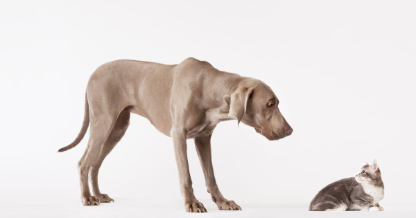 dog and cat looking at each