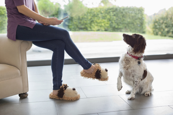 dog sitting for woman with cell